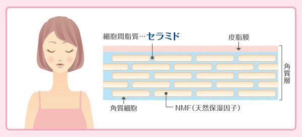 皮脂膜とNMFとセラミドの図