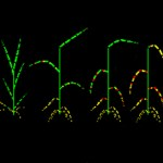 3-D plant–pathogen model for disease epidemics