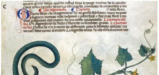 Cucumbers and melons in medieval manuscripts