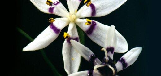 plantmatingsystems