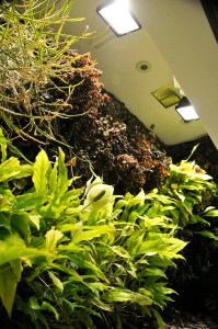 Lighting and ventilation for an indoor living wall