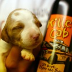 Puppy and Wine