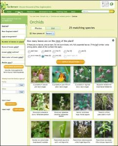 Plant identification on line
