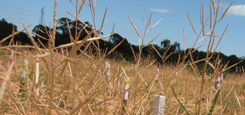 Parental environment and seed response to karrikinolide