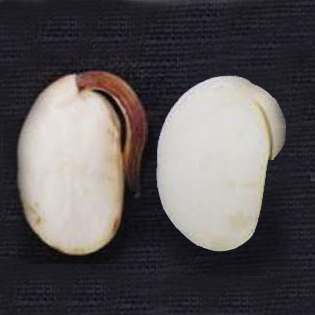 The role of ROS in soybean seed germination
