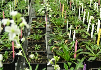 Flowering and morphology responses to high latitudes