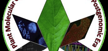 Plant Molecular Cytogenetics in the Genomic and Postgenomic Era
