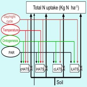 Nitrate uptake modelling in plants: root activity