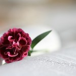 bible-888299_640