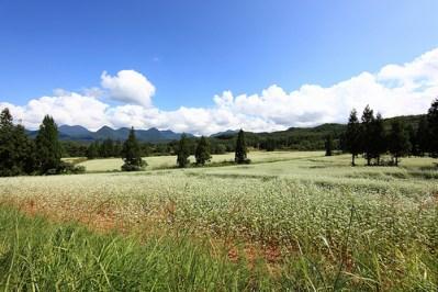 太陽光発電のための農地転用の申請方法