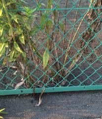 コンクリートを突き破る雑草!太陽光発電の絶対防草は難しい!