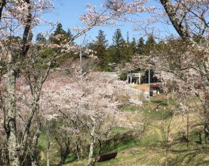 桜山公園から大村神社を望む