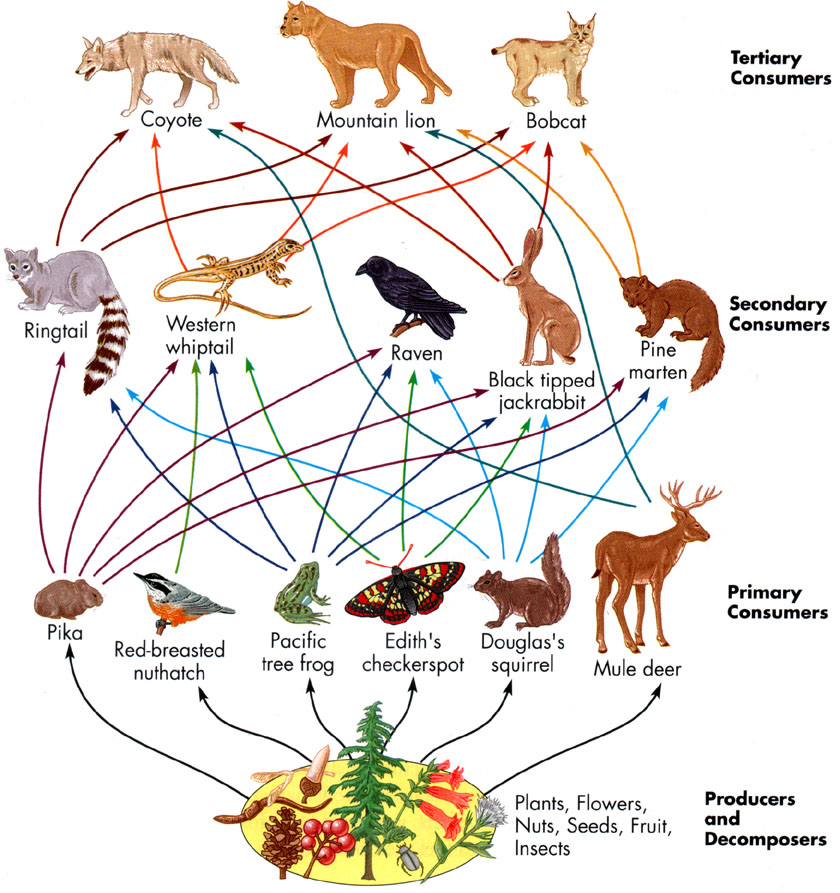 jaring jaring makanan hutan