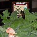 Fresh Kale for Chips
