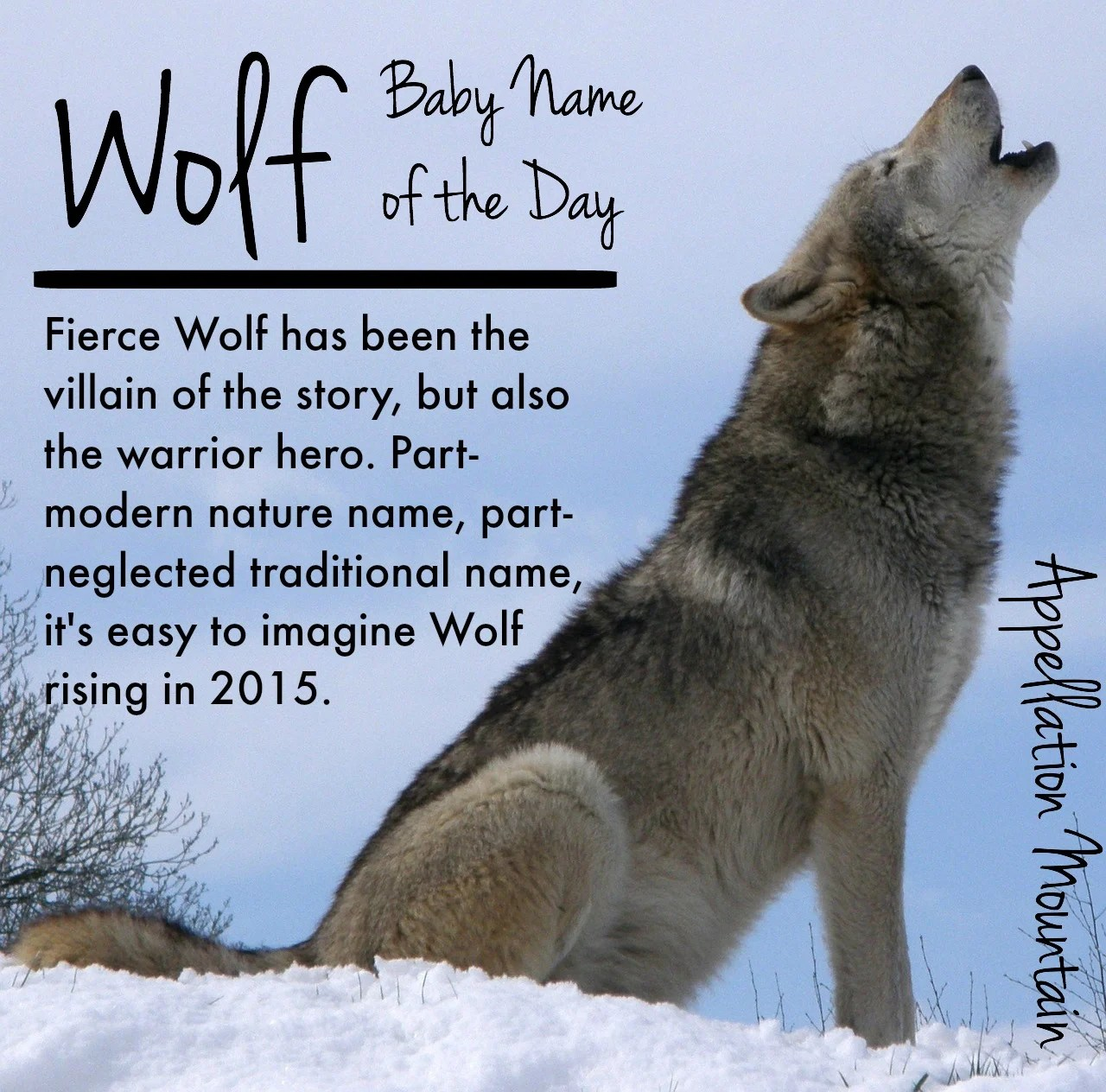 Fullsize Of Male Wolf Names
