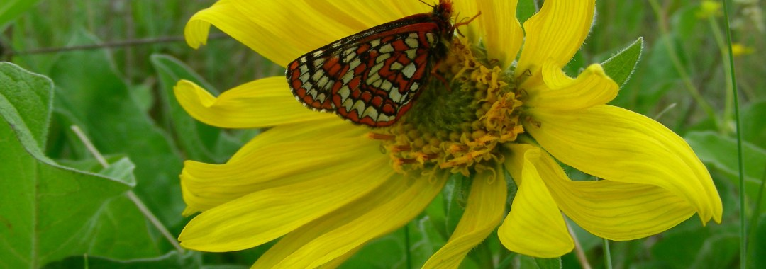 Taylor's on balsamroot