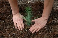 Planting trees moving forward in the Alaska arctic.