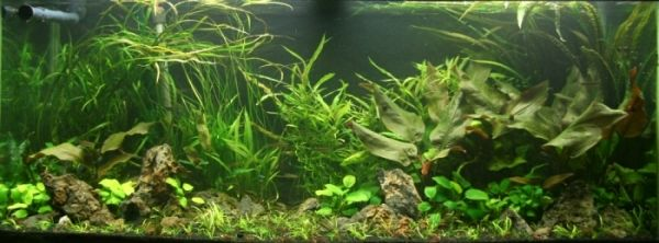My AGA 75 gallon aquarium with a mineralized soil substrate