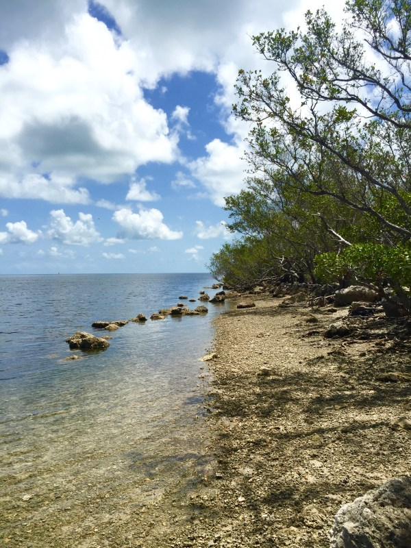 biscayne_shoreline_2