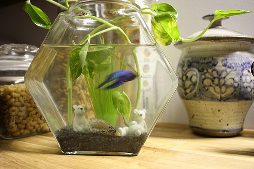 Betta than a Bowl betta fish aquariums betta tank
