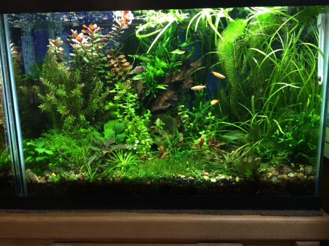 The above is a couple of 20 gallon planted aquariums that the pictures