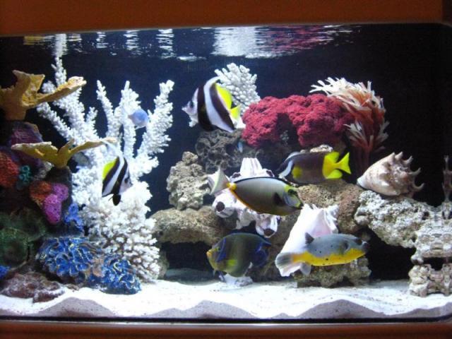 AquariumPros, Inc. Minnesota | Aquarium Maintenance Service and Sales