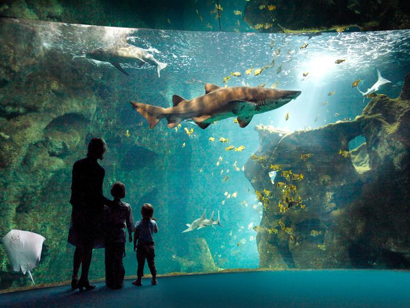 amphitheatre-requins(c)aquarium-larochelle