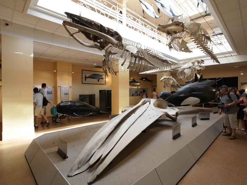 galerie-des-cetaces
