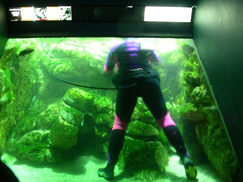 Easy maintenance fish tank jobs my tank at work for What do you need for a fish tank