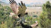 Turismo de Aragón apuesta por las rutas ornitológicas como producto estrella