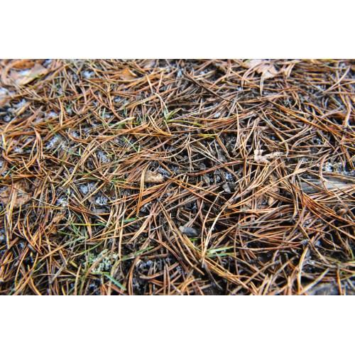 Medium Crop Of Pine Needle Mulch