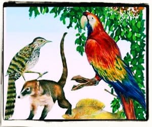 Especies en peligro de extinción (México)
