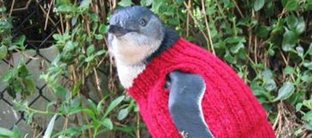 penguinheader