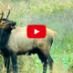 Tips for Elk Viewing in Boxley Valley by the Arkansas Game and Fish Commission