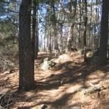 Mt. Magazine Trail (Cam. Bluff-Cove Lake) - 10mip2p photo