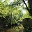 Cedar Creek, seen from the north side of the Cedar Creek Trail
