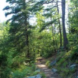 North side of Cedar Creek Trail. This is also part of the Boy Scout Trail.