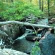 Cascade on Cedar Creek, near the second footbridge.