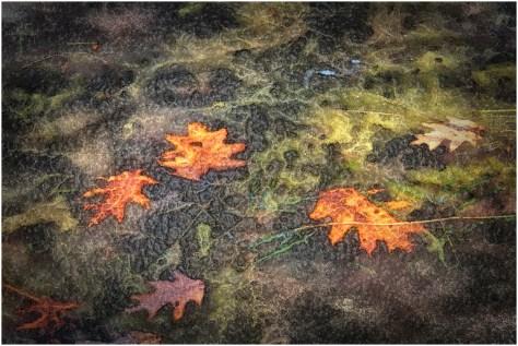 Bob Reynolds - Frozen Leaves