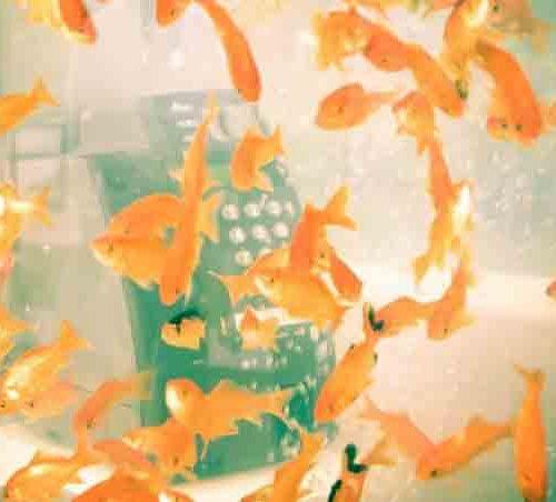 телефонные будки с рыбками в Японии-2