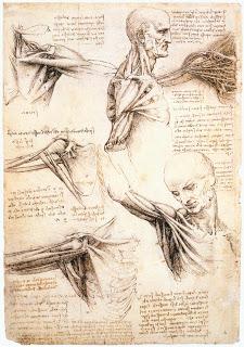 Studies of the Shoulder and Neck, Leonardo Da Vinci