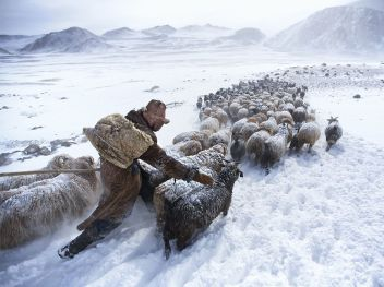 Herding in the Altai
