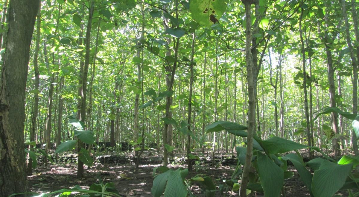 Hutan Rakyat Bantul