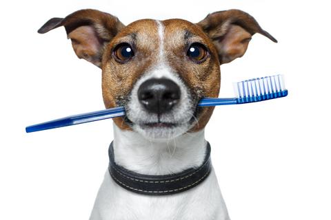 dental_dog