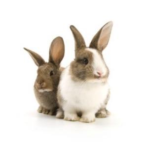 pet_rabbits_s