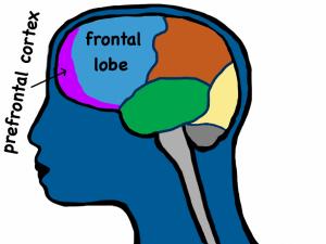 prefrontalcortex-1
