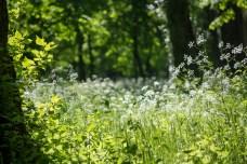 Dziekie łąki w Łazienkach Królewskich