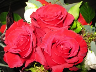 Roses Rose Flowers