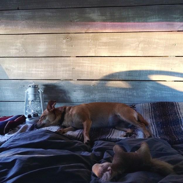 Bambi sleeping in the van