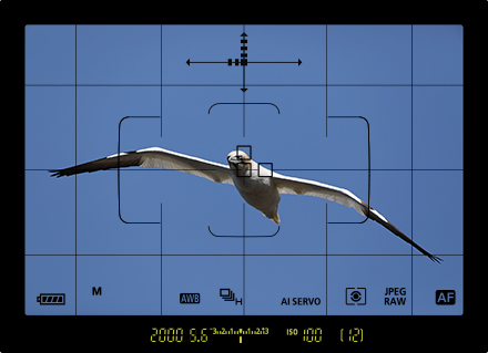 view-finder-display